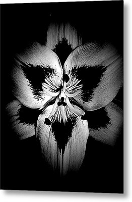 Drawn To The Center  Metal Print by Beth Akerman