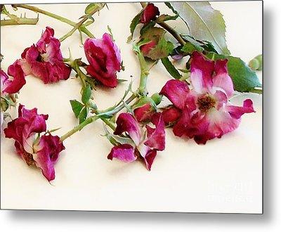 Dried Beauty Roses Metal Print by Marsha Heiken