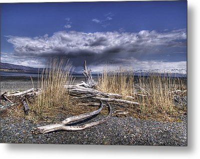 Driftwood By The Sea Metal Print by Michele Cornelius