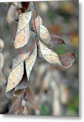 Dry Leaves Metal Print by Lisa Phillips