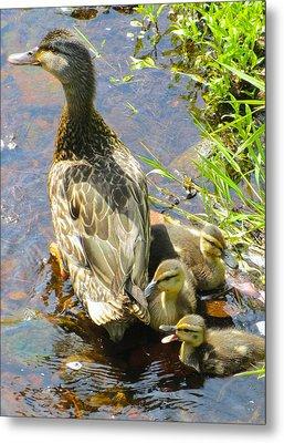 Ducklings Metal Print by Sarah Gayle Carter