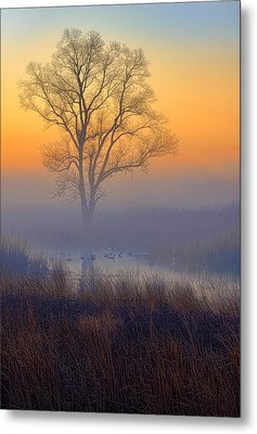 Ducks At Sunrise Metal Print by Jay Sheinfield