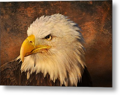Eagle 47 Metal Print by Marty Koch