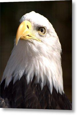 Eagle Eye Metal Print by Marty Koch