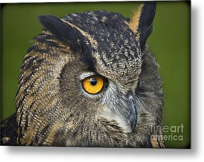 Eagle Owl 2 Metal Print by Clare Bambers