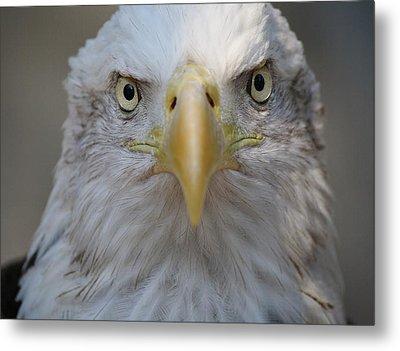 Eagle Metal Print by Paulette Thomas