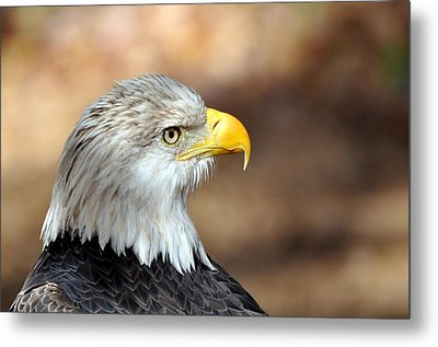 Eagle Right Metal Print by Marty Koch