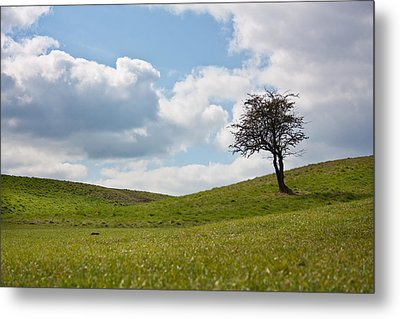 Early Spring Metal Print by Semmick Photo