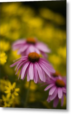 Echinacea Dreamy Metal Print by Mike Reid