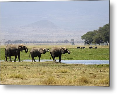 Elephants At The Watering Hole Metal Print by Marion McCristall