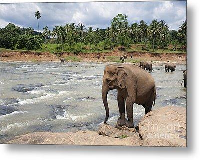 Elephants Metal Print by Jane Rix