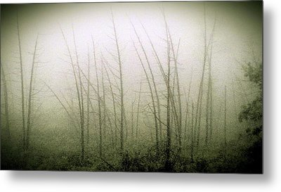 Emerson Bog At Dawn Metal Print by Mike Greco