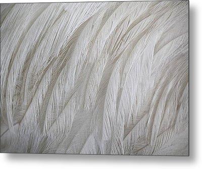 Emu Feathers Metal Print by Paulette Thomas