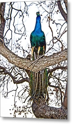 Enchanted Metal Print by Molly Heng