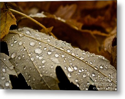 End Of Season Metal Print by Susan Herber