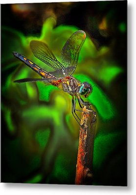 Enhanced Dragonfly Metal Print by Dave Sandt