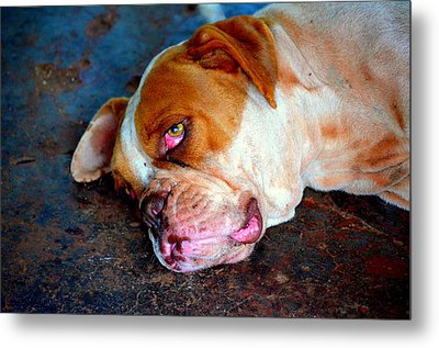 Exhausted Metal Print by Paulo Zerbato
