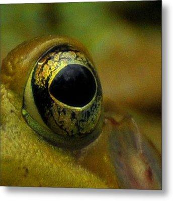 Eye Of Frog Metal Print by Paul Ward
