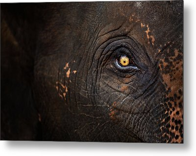 Eye Of Thai Elephant Metal Print by presented by Zolashine