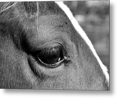 Eye Of The Horse Black And White Metal Print by Sandi OReilly