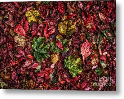 Fall Autumn Leaves Metal Print by John Farnan