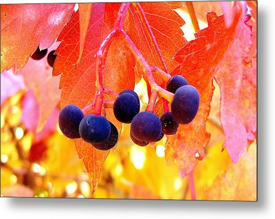 Fall Colors Metal Print by Marilyn Magee