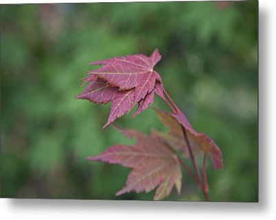 Fall Colors Metal Print by Molly Heng