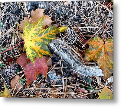 Fall Forest Floor Metal Print by Will Borden