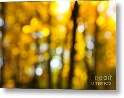 Fall Forest In Sunshine Metal Print by Elena Elisseeva