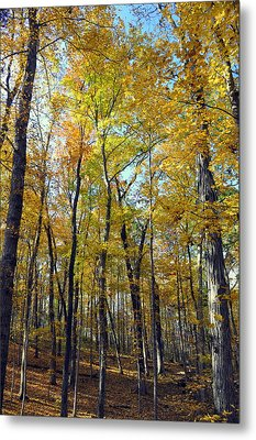Fall In The Forest 2 Metal Print by Marty Koch