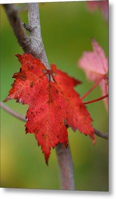 Fall Leaf Metal Print by Brady D Hebert