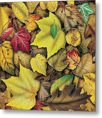 Fall Leaf Study Metal Print by JQ Licensing