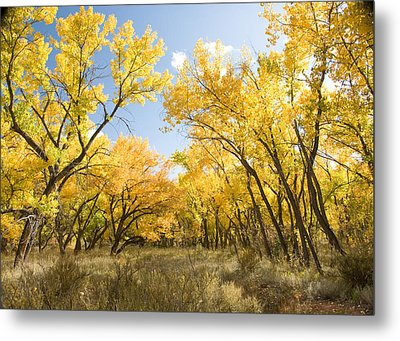 Fall Leaves In New Mexico Metal Print by Shane Kelly