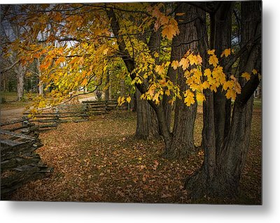 Fall Maple Leaf Trees With Split Rail Fence Metal Print by Randall Nyhof