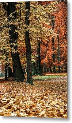 Fall Scenery Metal Print by Hannes Cmarits