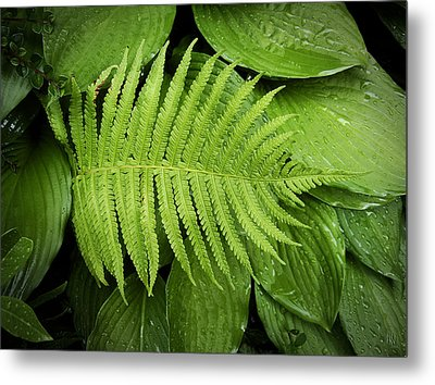 Fern On Top Metal Print by Nafets Nuarb