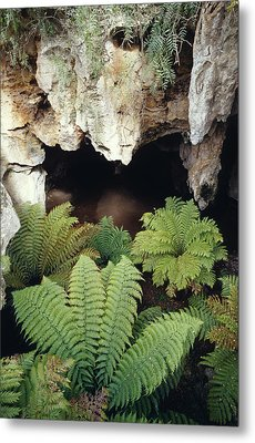 Ferns Growing In The Gaping Mouth Metal Print by Jason Edwards