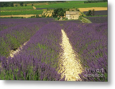 Field Of Lavender. Drome Metal Print by Bernard Jaubert