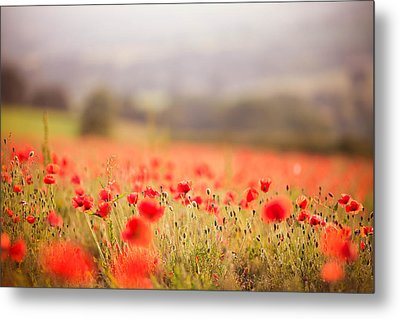 Fields Of Wild Poppies Metal Print by Olivia Bell Photography