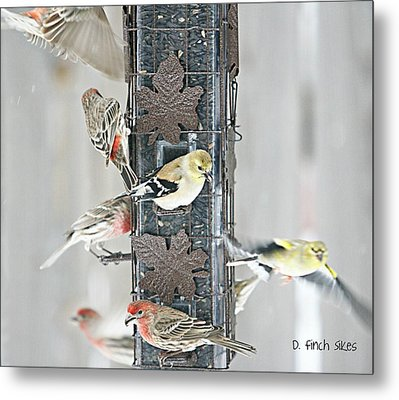Finches Metal Print by Debbie Sikes