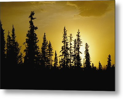 Fir Trees Silhouetted In Early Morning Metal Print by George F. Mobley