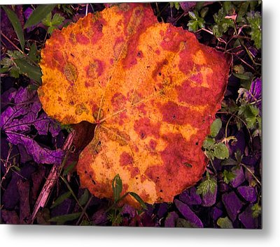 First Sign Of Autumn Metal Print by Gordon H Rohrbaugh Jr
