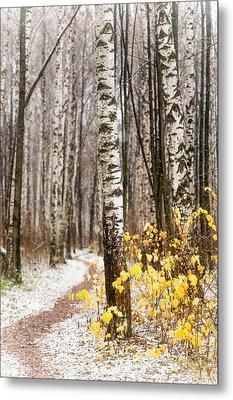 First Snow. Hidden Path Metal Print by Jenny Rainbow