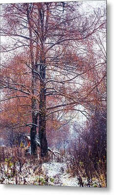First Snow. Winter Coming Metal Print by Jenny Rainbow