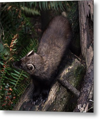 Fisher - 0005 Metal Print by S and S Photo