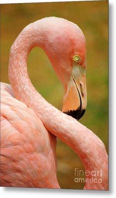Flamingo Metal Print by Carlos Caetano