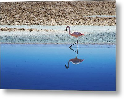 Flamingo Metal Print by MaCnuel