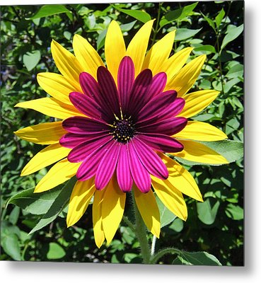 Floral Fusion Metal Print by Eric Kempson