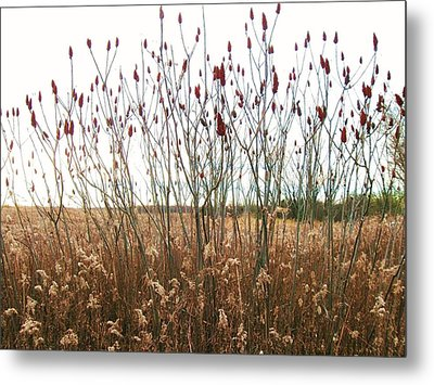Flower-21 Metal Print by Todd Sherlock