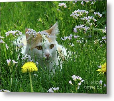 Flower Cat Metal Print by Bruno Santoro